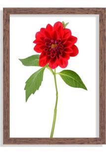 Quadro Decorativo Peônia Flor Vermelha Madeira - Médio