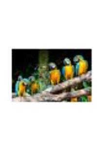 Painel Adesivo De Parede - Araras - 049Pn-G